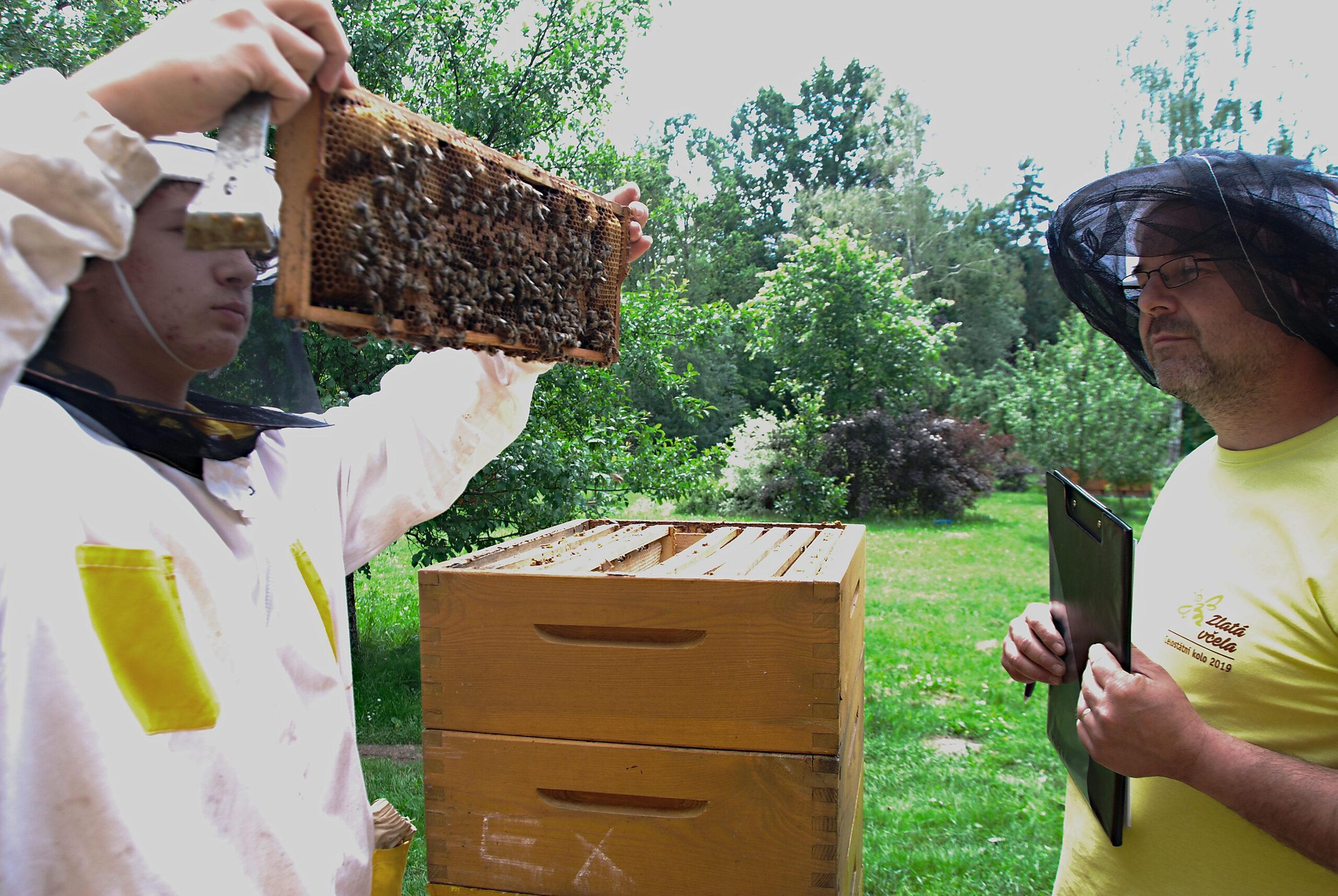 Mládež včelaří